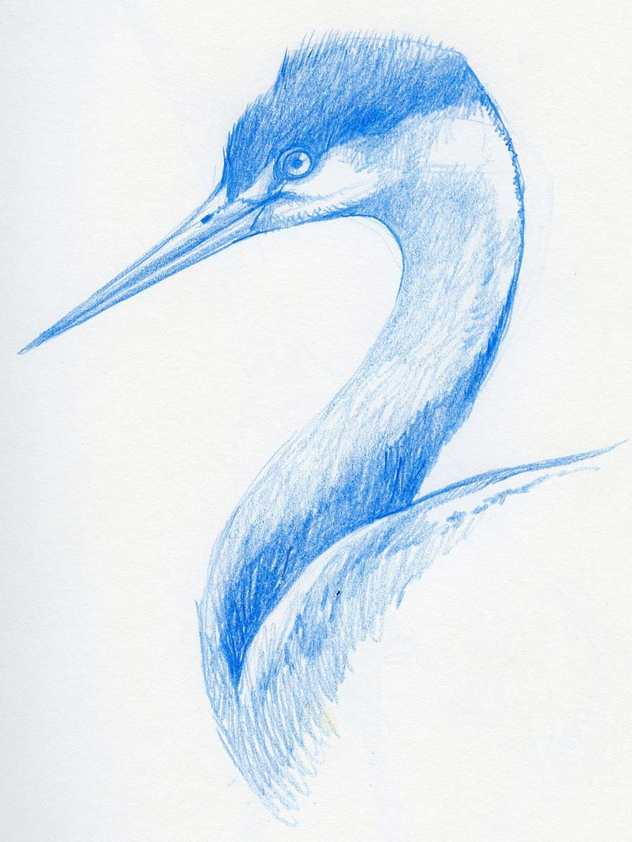 06_Drawing__Birds_Course_Gallery0007.jpg